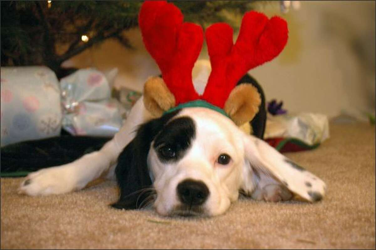 Maddy Submitted by sunnyday