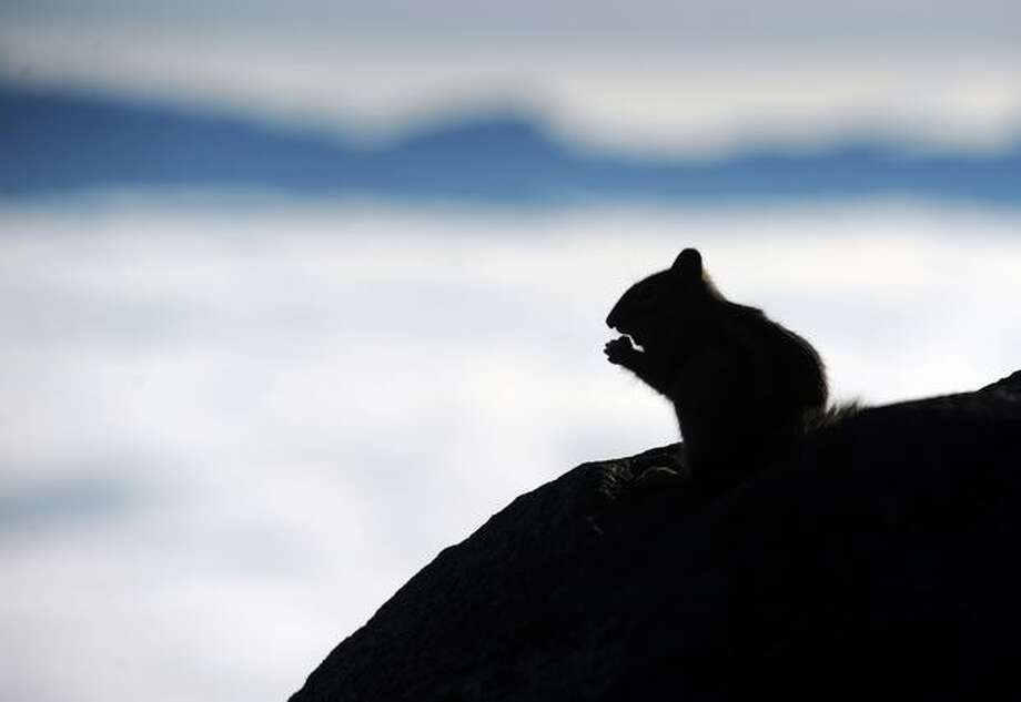 A chipmunk sits on a rock looking over the Cascade Mountains from Mount Rainier on Oct. 6, 2009. Photo: Thom Weinstein, Seattlepi.com