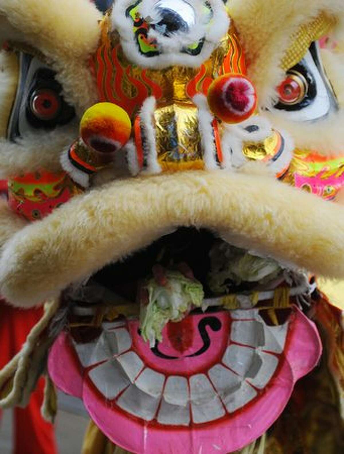"""The lion """"chews"""" cabbage during the Lunar New Year celebration in Seattle's International District Feb. 13, 2010."""