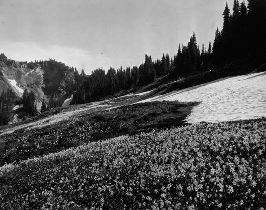 Wildflowers on Mount Rainier, 1935. Photo: P-I File