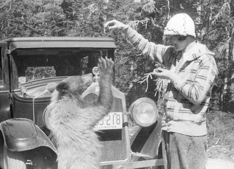 A woman plays with a bear near Mount Rainier. Date unknown.