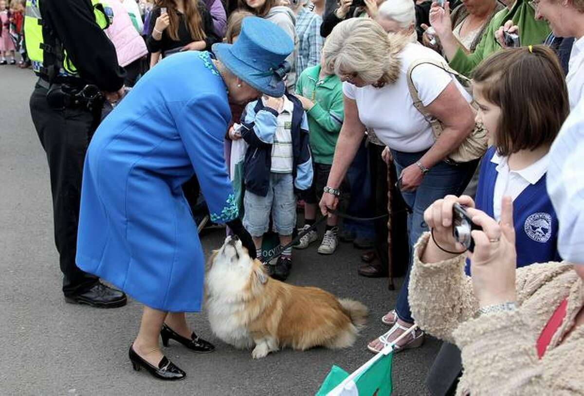 HM Queen Elizabeth II meets a corgi called Spencer as she arrives at Welshpool train station in Welshpool, Wales. The Queen and Duke of Edinburgh are on a two day visit to North Wales.