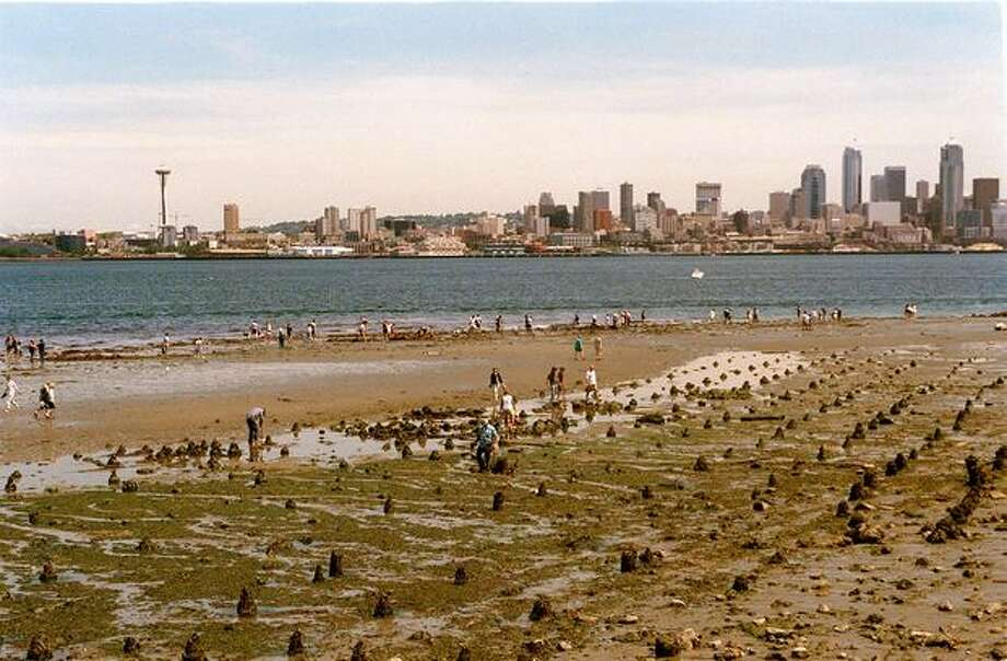 During the lowest tide of the year, dozens of people visit the site of Luna Park to look for artifacts. This picture was taken in June 1999. Photo: P-I File