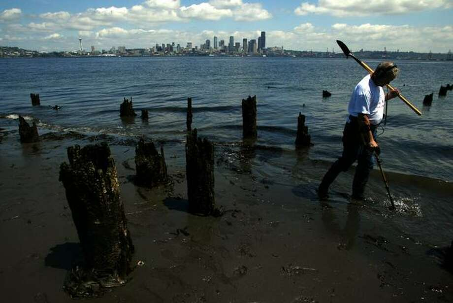 The 2005 photo caption read: Richard McCleary takes advantage of today's 3.9 low tides to do some metal detecting on the beach at the site of the old Luna Park in West Seattle. McCleary works for Boeing and started metal detecting over 10-years-old. He is now a member of the Cascade Treasure Club. (Gilbert W. Arias/Seattlepi.com file) Photo: P-I File