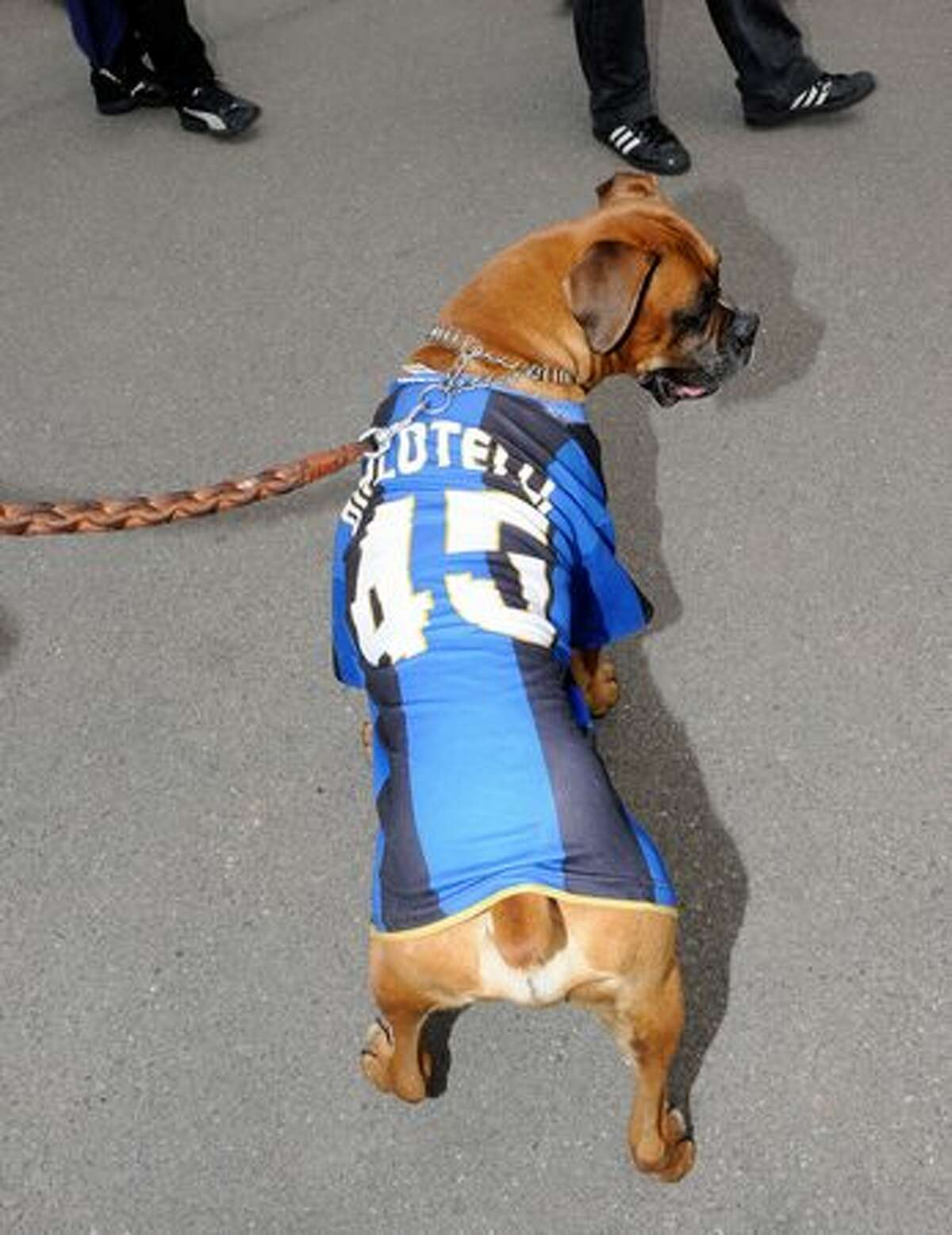 A dog wearing a FC Internazionale Milano shirt prior to the Serie A match between FC Internazionale Milano and AC Chievo Verona at Stadio Giuseppe Meazza in Milan, Italy.