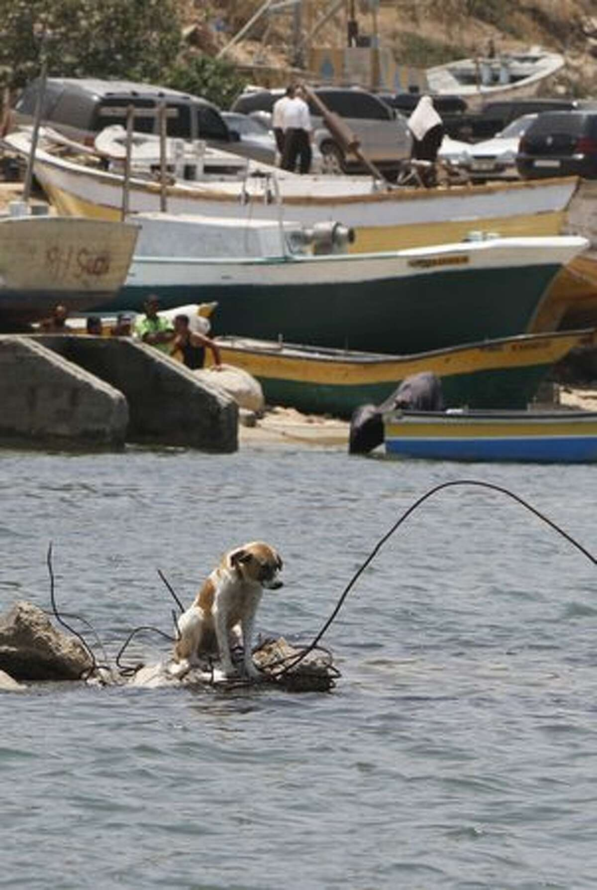 """A dog sits on rubble in the sea off the coast of Gaza City's port, where the authorities were preparing for the arrival of the """"Freedom Flotilla"""" bound for the Hamas-run Gaza Strip in defiance of an Israeli embargo, carrying tonnes of aid supplies and hundreds of pro-Palestinian peace activists."""