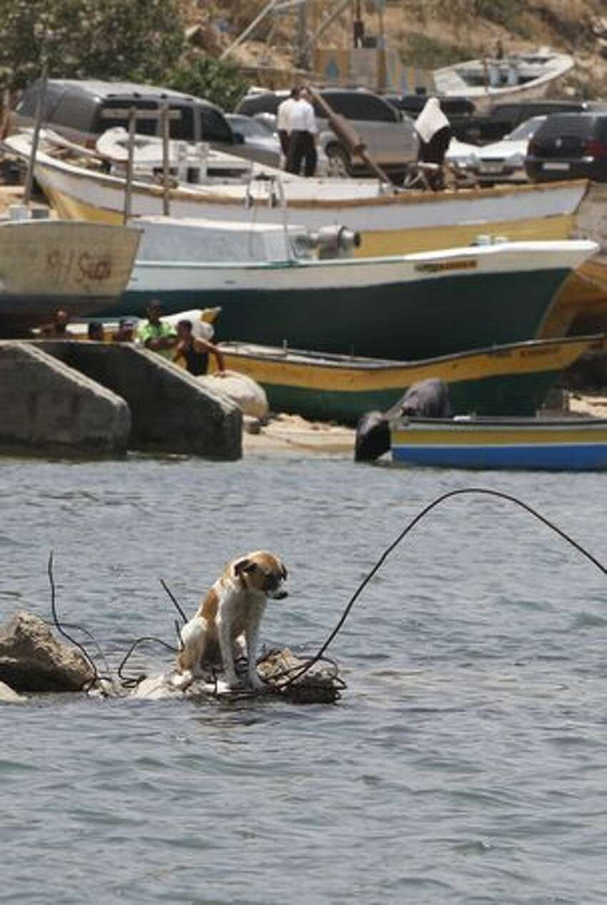 A dog sits on rubble in the sea off the coast of Gaza City's port, where the authorities were preparing for the arrival of the