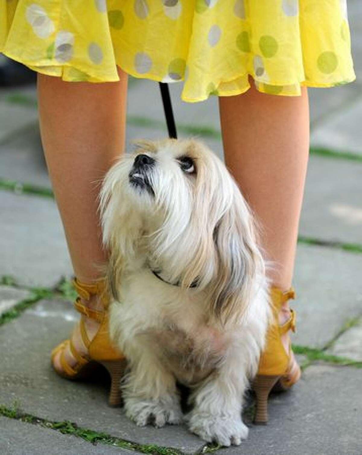 A dog and owner attend a dog show in Minsk central park, in Minsk, Belarus.