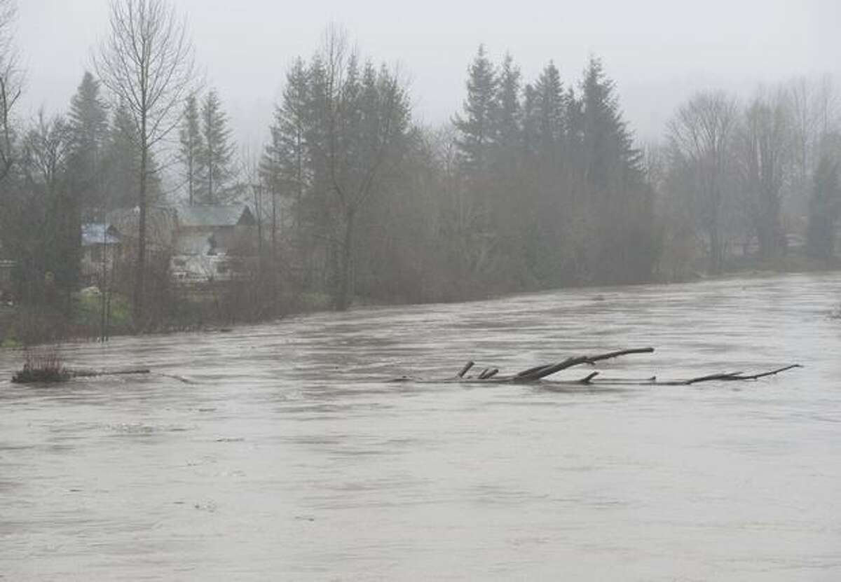 An large tree drifts down the Snoqualmie River after heavy rains flooded area rivers.