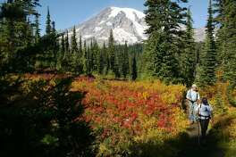 Kathi Acosta and Larry Shifflette, both from Eatonville, wander through colorful fall foliage during a hike up to Pinnacle Saddle in Mount Rainier National Park on Sunday, September 28, 2003. (Joshua Trujillo / P-I)