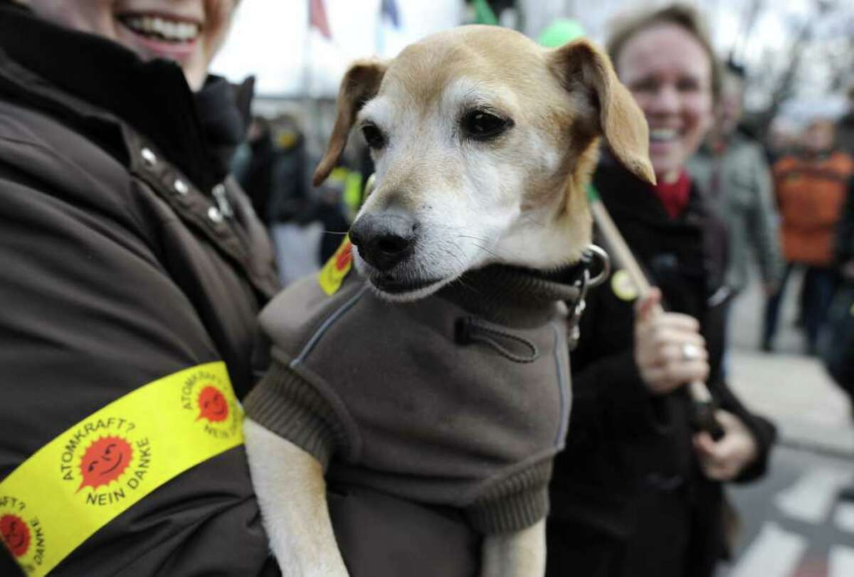 An anti-nuclear demonstrator brings her dog as they take part in a protest march in Berlin.