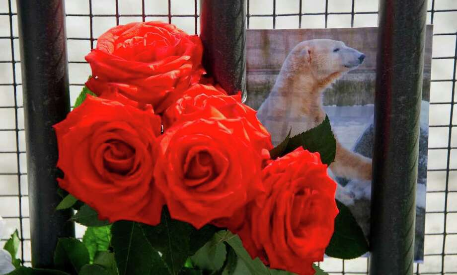 Red roses and a picture of Knut the polar bear can be seen in front of the entrance to the Berlin zoo (Zoologischer Garten) March 20, 2011. Germany was in stunned mourning after the sudden and premature death of Knut, Berlin's world-famous polar bear, who died on March 19, 2011, at the end of what animal welfare groups said was an unhappy, short life.  AFP PHOTO / JOHANNES EISELE Photo: JOHANNES EISELE, Getty Images / 2011 AFP