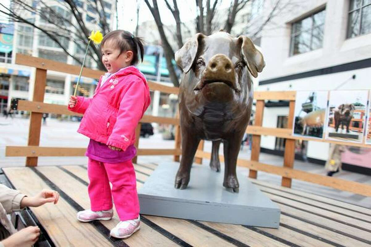 Samantha Cheung, 2, holds a daffodil while standing next to a refurbished Rachel the Pig at Westlake Park on Friday, March 18, 2011 in Seattle. The bronze cast piggy bank, an icon at Pike Place Market, was recently hit by a taxi and required repair work. On Friday the icon was reinstalled at the market.