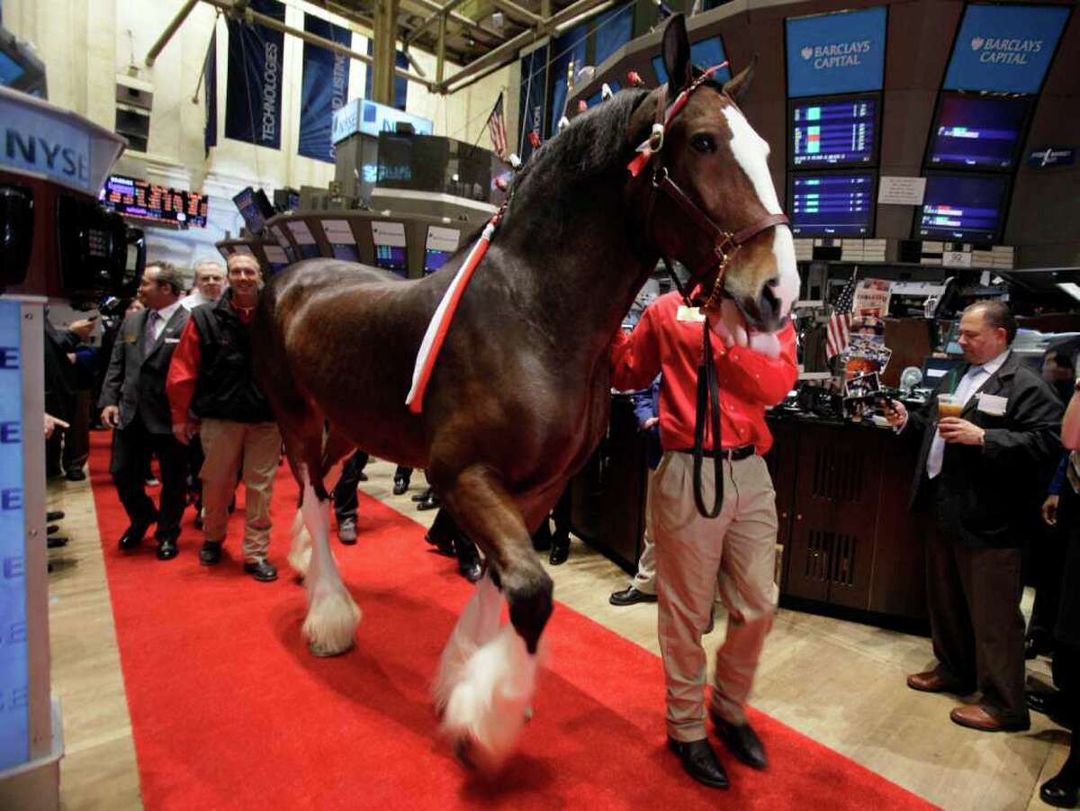 A Budweiser Clydesdale is led across the trading floor of the New York Stock Exchange for participation in opening bell ceremonies, in observance of Major League Baseball's opening day, Thursday, March 31, 2011.