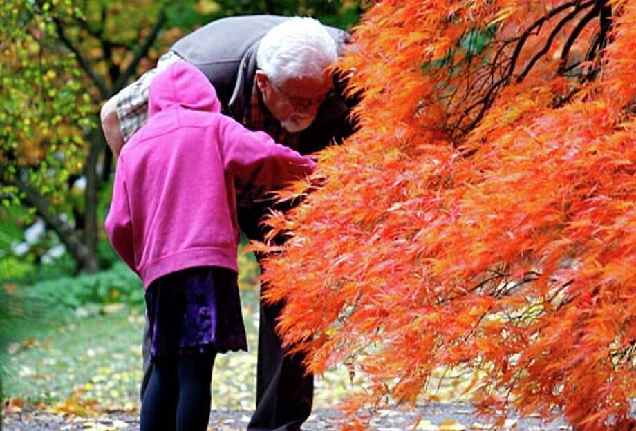 Waldo Neufeld and his granddaughter Thalia Neufeld explore fall foliage at Seattle's Washington Park Arboretum, on Wednesday October 29, 2008. (Gilbert W. Arias / Seattle P-I file photo)