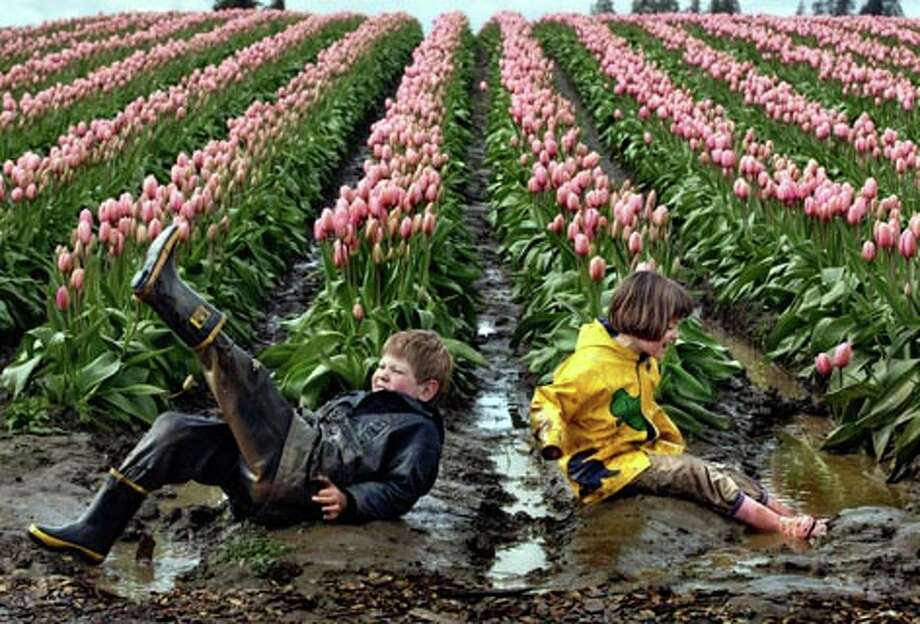 Alex Fritch, 7, and his sister Ana, 8, of Snohomish, Wash. empty the water from their boots after splashing in the puddles near the Pink Impression tulips at Tulip Town during the Skagit Valley Tulip Festival Tuesday, April 8, 2008. (Andy Rogers / Seattle P-I) / SEATTLE POST-INTELLIGENCER