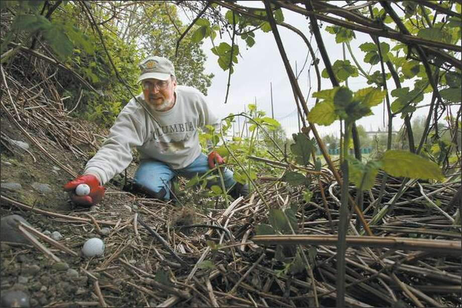Early life experience helps Brad Munsell deal with blackberry thorns frequently covering golf balls he collects at Puetz Golf driving range on Aurora Avenue North. Photo: Joshua Trujillo/Seattle Post-Intelligencer