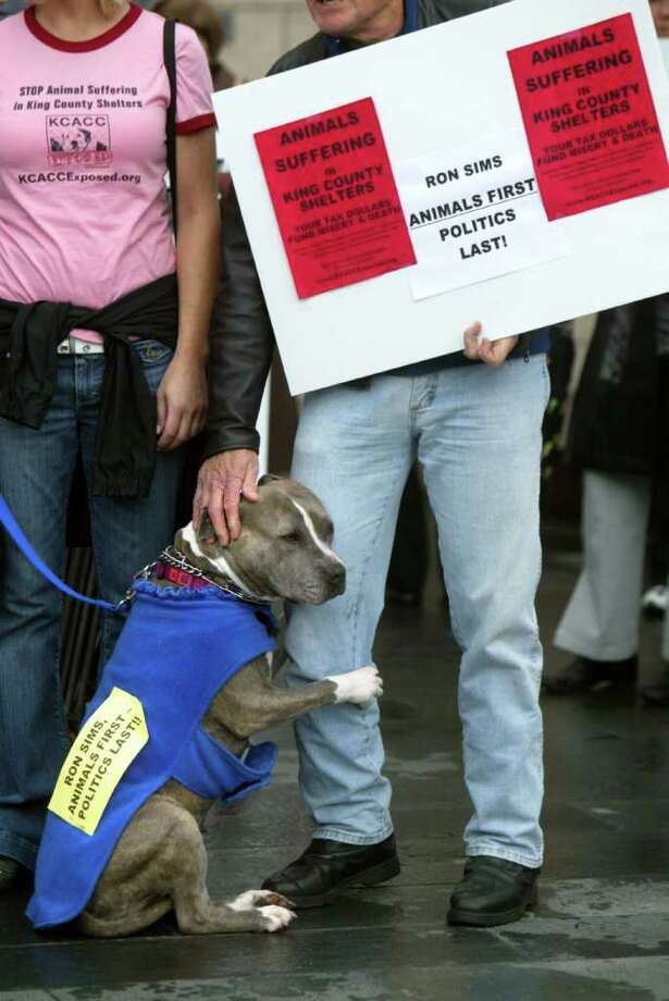 "Bluebell, a pitbull, hugs John Wagner's leg during a rally by KCACC Exposed, outside City Hall in support of a proposal that the county reduce its role in providing shelter and other services for animals in Seattle on October 6, 2008.  ""She's an angel."" Bluebell's owner, Jacinda Kaye of Maple Valley, Wash. says of her dog who was rescued. A counter rally was held by the King County Animal Care and Control who set up an animal adoption tent in the park next to the King County Courthouse. They believe the animal shelter should remain in the control of the county.  ""King County has to take everything that comes to their door."" said one volunteer, noting that the private shelters can turn animals away and there would be no place for them to go.   (Karen Ducey/The Seattle Post-Intelligencer)