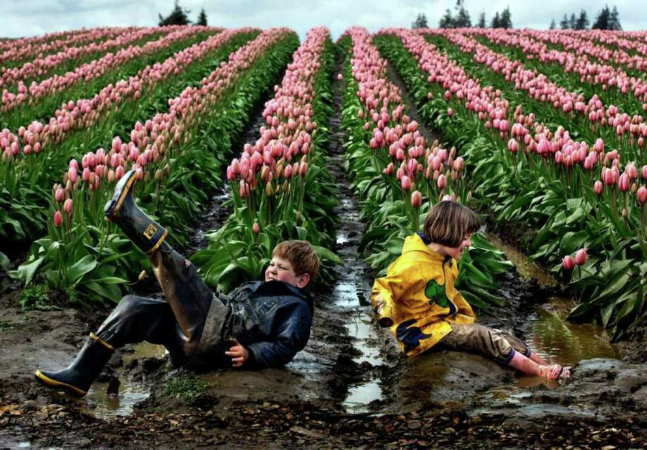 "Alex Fritch, 7, and his sister Ana, 8, of Snohomish, Wash. empty the water from their boots after splashing in the puddles near the Pink Impression tulips at Tulip Town during the Skagit Valley Tulip Festival Tuesday, April 8, 2008. ""The flowers are incidental. The mud and the puddles are far more interesting,"" say their mother, who has brought the siblings there the past five years. The kids have come to enjoy playing in the puddles so much, that the family times its visits for after a rain, bringing multiple changes of clothes. This was change number two on the day. The festival runs through April 30. The tulips have been about a week late to bloom due to cold weather, but Tulip Town owner Jeannette Degoede expects to see the number of flowers showing color to double within just the next couple of days, and the weekend to be a sea of color.(Seattle Post-Intelligencer/Andy Rogers)