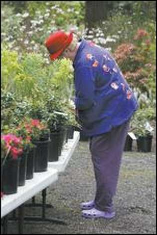 Francine Marsh of Fircrest checks out plants for sale at the Rhododendron Species Foundation and Botanical Garden in Federal Way on April 25, 2007. (Meryl Schenker / Seattle P-I)