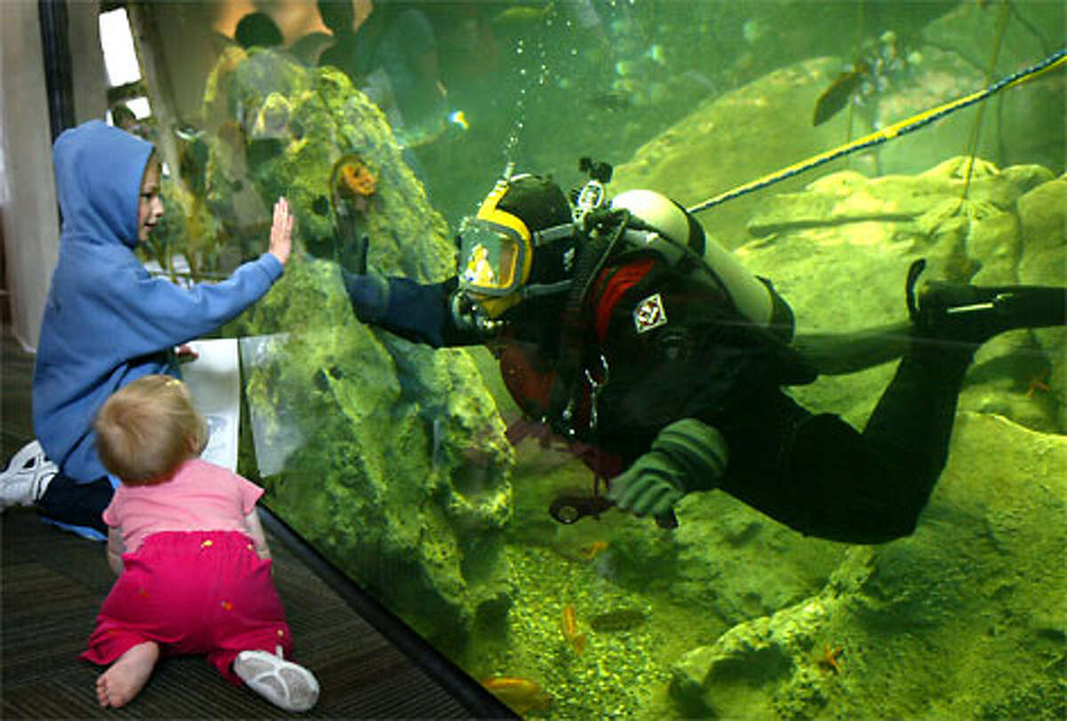 The Window on Washington Waters tank at the Seattle Aquarium is a popular attraction for kids of all ages. (Joshua Trujillo / Seattle P-I file)