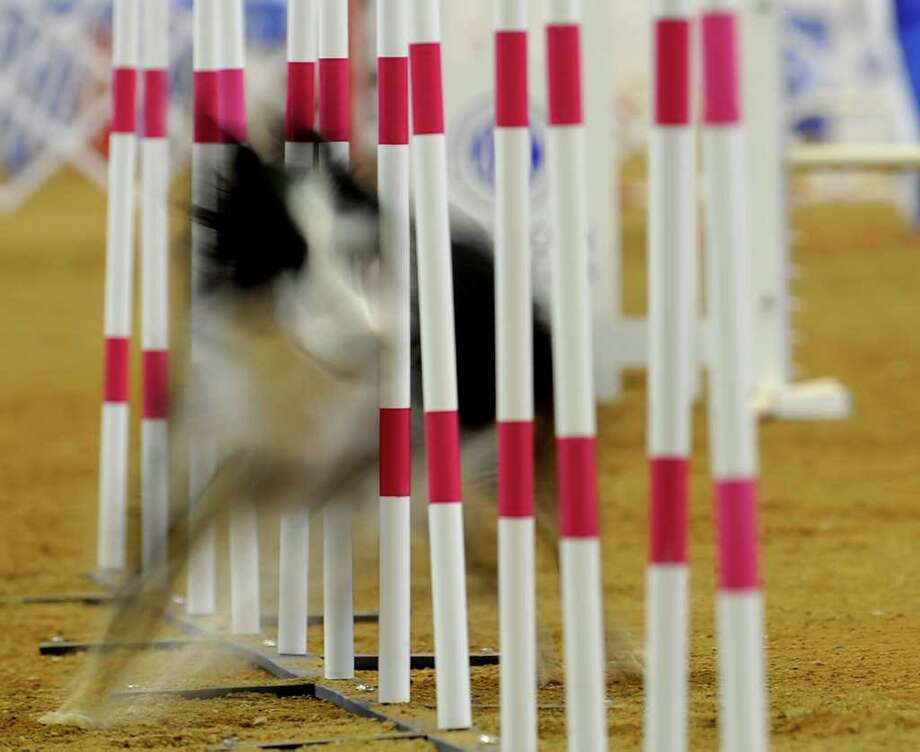 A dog is photographed using a long exposure as it runs through the agility course at the the 15th annual American Kennel Club National Agility Championship in Lexington, Ky., Friday, April 1, 2011. The event drew more than 1,100 dogs to the Virginia Horse Center in Lexington for a weekend of competition. Photo: AP