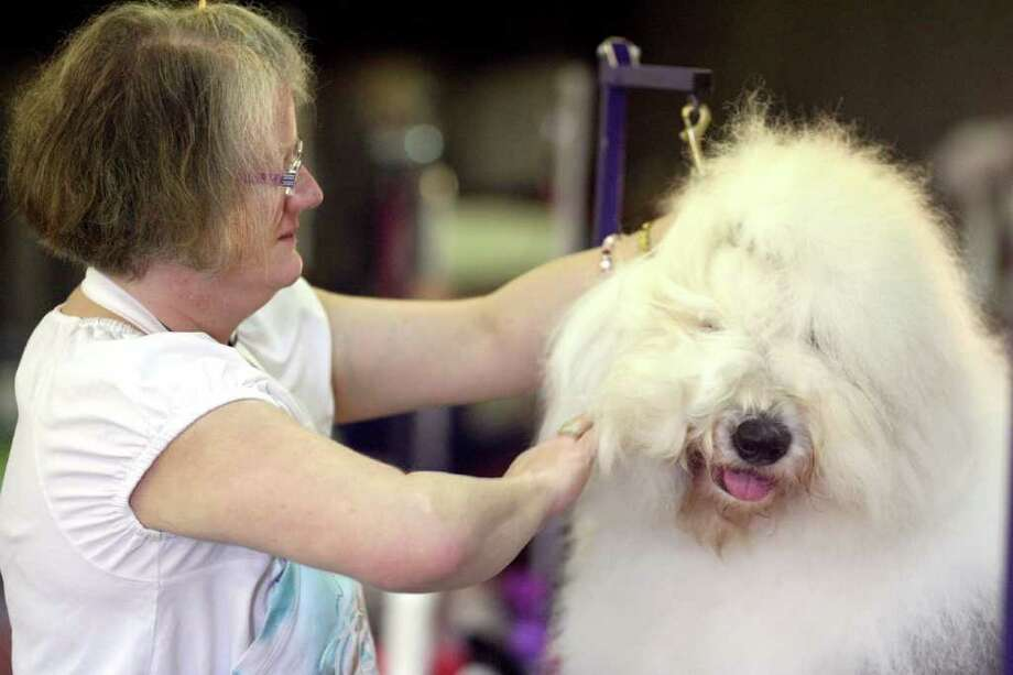 Dea Freiheit, from Coulee City, gets her old English sheep dog Luciano groomed for judging at the Peninsula Dog Fanciers Club all-breed dog show at the Kitsap County Fairgrounds Saturday, March 26, 2011 in Bremerton, Wash.. The annual event runs through Sunday at the Kitsap County Fairgrounds and Event Center. Photo: AP