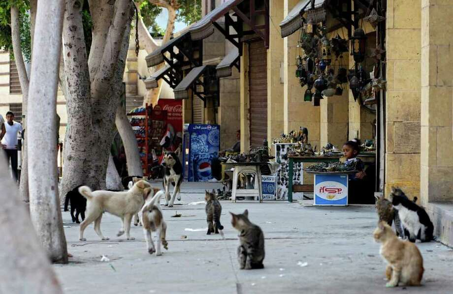 In this Saturday, March 26, 2011 photo, cats and dogs are seen in the empty streets of the Coptic area of old Cairo, Egypt. Tourists haven't returned to Egypt in any significant numbers, dealing a blow to this impoverished country that relies on foreign visitors to employ some 2 million Egyptians, and whose spending represents some 5 to 6 percent of GDP. (AP Photo/Sergey Ponomarev) Photo: Sergey Ponomarev, ASSOCIATED PRESS / AP2011