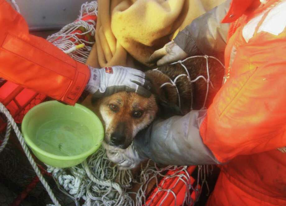 CORRECTS SOURCE - In this Friday, April 1, 2011, photo released by the Japan Coast Guard via Kyodo News, Members of the Japan Coast Guard rescue a dog after it was found drifting on the roof of a house floating off Kesennuma, northeastern Japan. The dog wears a collar, but there is no address on it. The March 11 earthquake off Japan's northeast coast triggered a tsunami that barreled onshore and disabled the Fukushima Dai-ichi nuclear power plant. (AP Photo/Japan Coast Guard via Kyodo News) JAPAN OUT, MANDATORY CREDIT, NO LICENSING IN CHINA, HONG KONG, JAPAN, SOUTH KOREA AND FRANCE Photo: AP