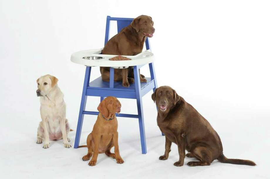 SYDNEY, AUSTRALIA - MARCH 30:  In this handout photo provided by IKEA the first pups to try the new HUNDSTOL dog highchair from IKEA are seen on March 30, 2011 in Sydney, Australia. Australia is set to become the international test market for the HUNDSTOL due to Australia having one of the highest incidences of pet ownership in the world, an estimated 36% of Australian households boast a a canine member of the family. Photo: Handout, Getty Images / 2011 IKEA