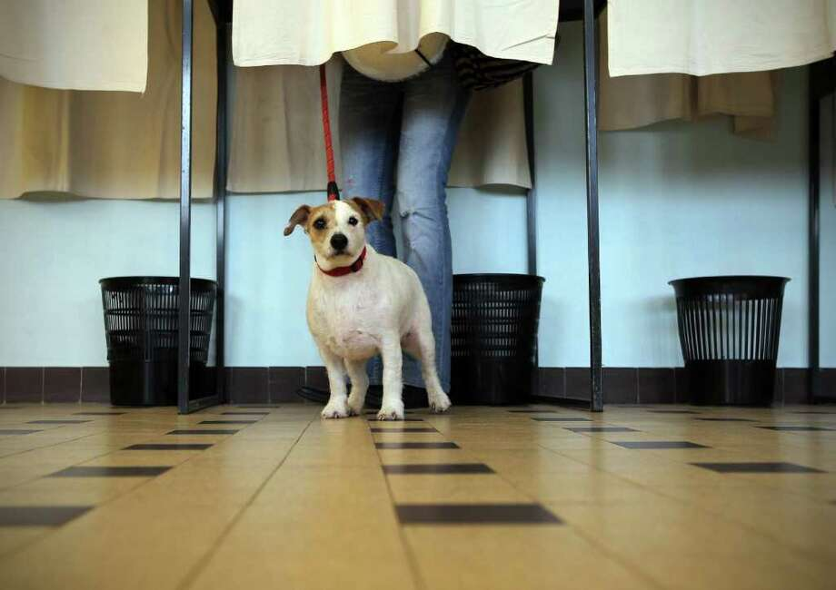A dog is seen as its mistress is seen in a polling booth at a polling station in Nice, southeastern France, on March 27, 2011, during the second round of the local elections. France's President ruling UMP party took a beating in last Sunday's first round, attracting just 17 percent of the vote, well behind the opposition socialists' 25 percent. Just behind the UMP however, the far-right National Front (FN) registered 15 percent of the votes, in the elections to local councils in France's 100 departments. AFP PHOTO VALERY HACHE Photo: VALERY HACHE, AFP/Getty Images / 2011 AFP