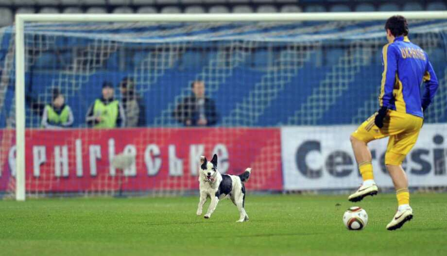 A stray dog runs for a ball on a pitch during a training prior to a friendly football match between Ukraine and Italy in Kiev on March 29, 2011.      AFP PHOTO/ SERGEI SUPINSKY Photo: SERGEI SUPINSKY, AFP/Getty Images / 2011 AFP
