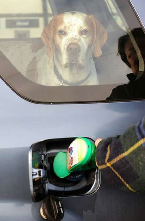 A dog looks from the rear window while the driver fills the car with fuel in Egham, England on January 2, 2011. Photo: Getty Images / Getty Images