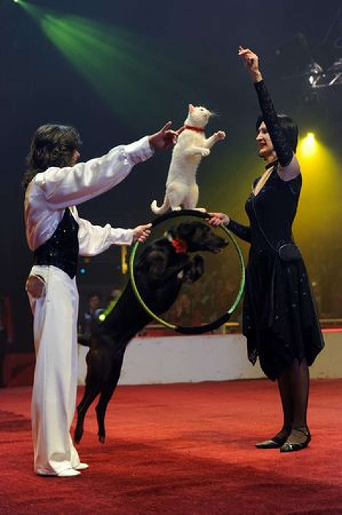 Russian cat and dog trainers perform during a show at the Massy circus on January 13, 2011 as part of the Circus International Festival that takes place in Massy, France from January 13, 2011 until January 16. (BERTRAND GUAY/AFP/Getty Images)