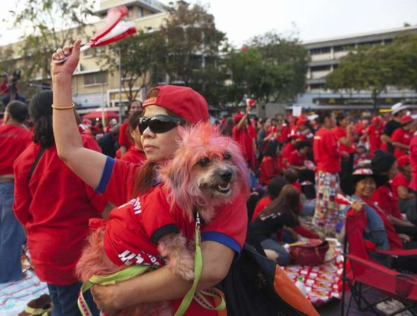 A female protester holds her dog during a large, peaceful, red-shirt rally on January 23, 2011 in Bangkok, Thailand. The anti-government red-shirts plan rallies twice a month to commemorate clashes with the military that happened during an April 2009 protest. The Thai government has relaxed restrictions on public gatherings allowing thousands of protesters to gather with police helping to direct traffic.