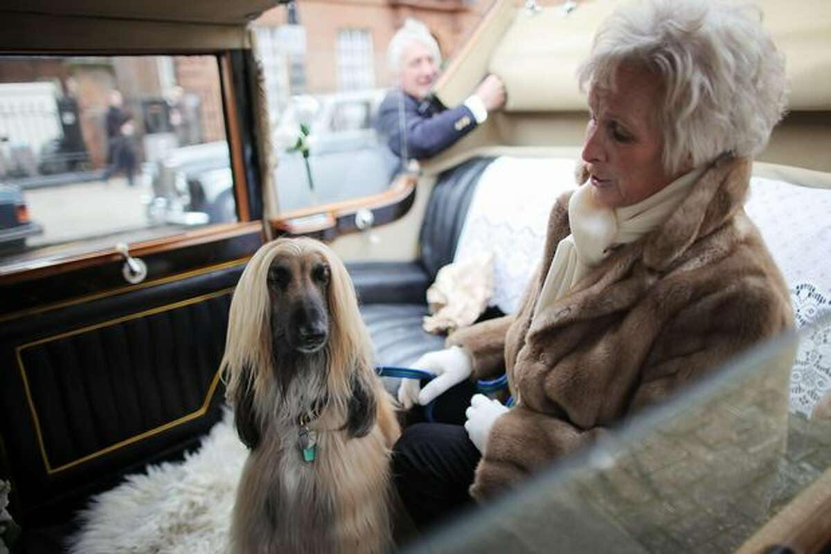 A woman sits with her dog in the back of a classic Rolls Royce car before a centenary parade on February 6, 2011 in London, England. Rolls Royce is celebrating the 100th anniversary of the introduction of the