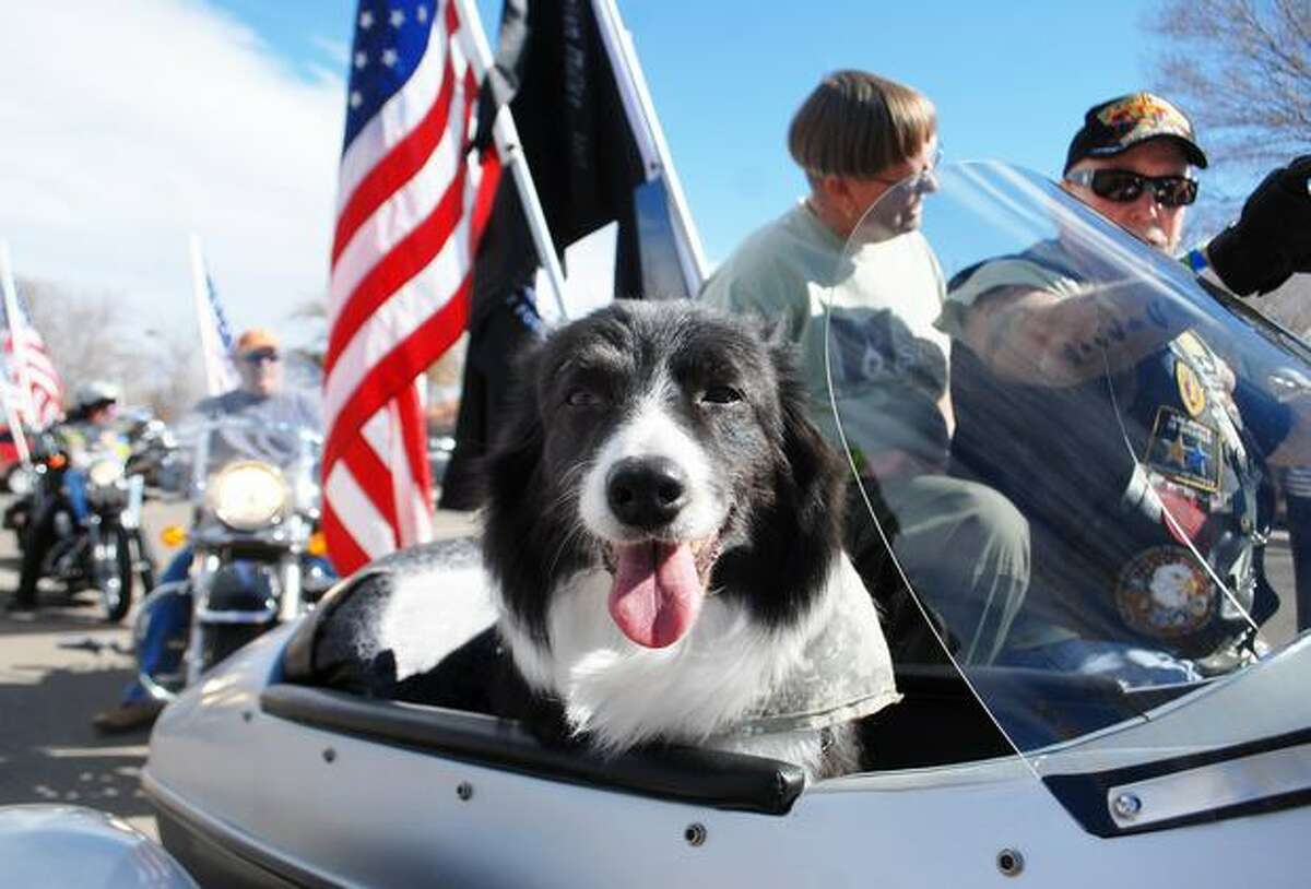 Sage, the Search & Rescue Dog, leads a parade held in her honor as she rides in the sidecar of Patriot Guard co-capitan Mike Murphy's motorcycle Saturday morning, Feb. 26, 2011 in Roswell, N.M. The Sage Foundation held a fundraiser to assist the four-legged heroes who have faithfully served in wars, police work, crime prevention, and rescue efforts. Sage has worked with various law enforcement agencies looking for missing persons and as a forensic K-9 dog in homicide investigations. In 2005, she was sent to Mississippi to provide search and rescue for hurricanes Katrina and Rita. Sage has also performed tours of duty in Iraq. (AP Photo/Roswell Daily Record Mark Wilson)