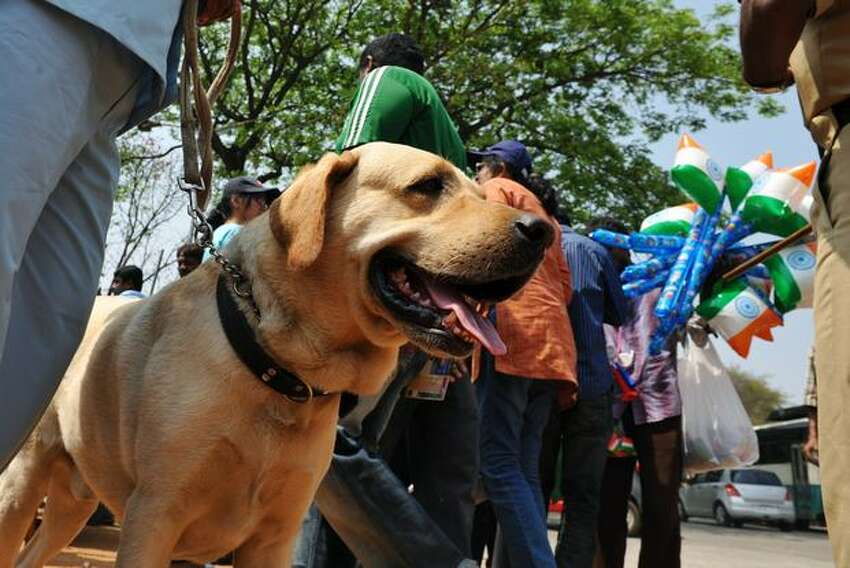 An Indian police sniffer dog sits outside a gate ahead of the start of the ICC Cricket World Cup 2011 match between England and India at The M. Chinnaswamy Stadium in Bangalore on February 27, 2011.