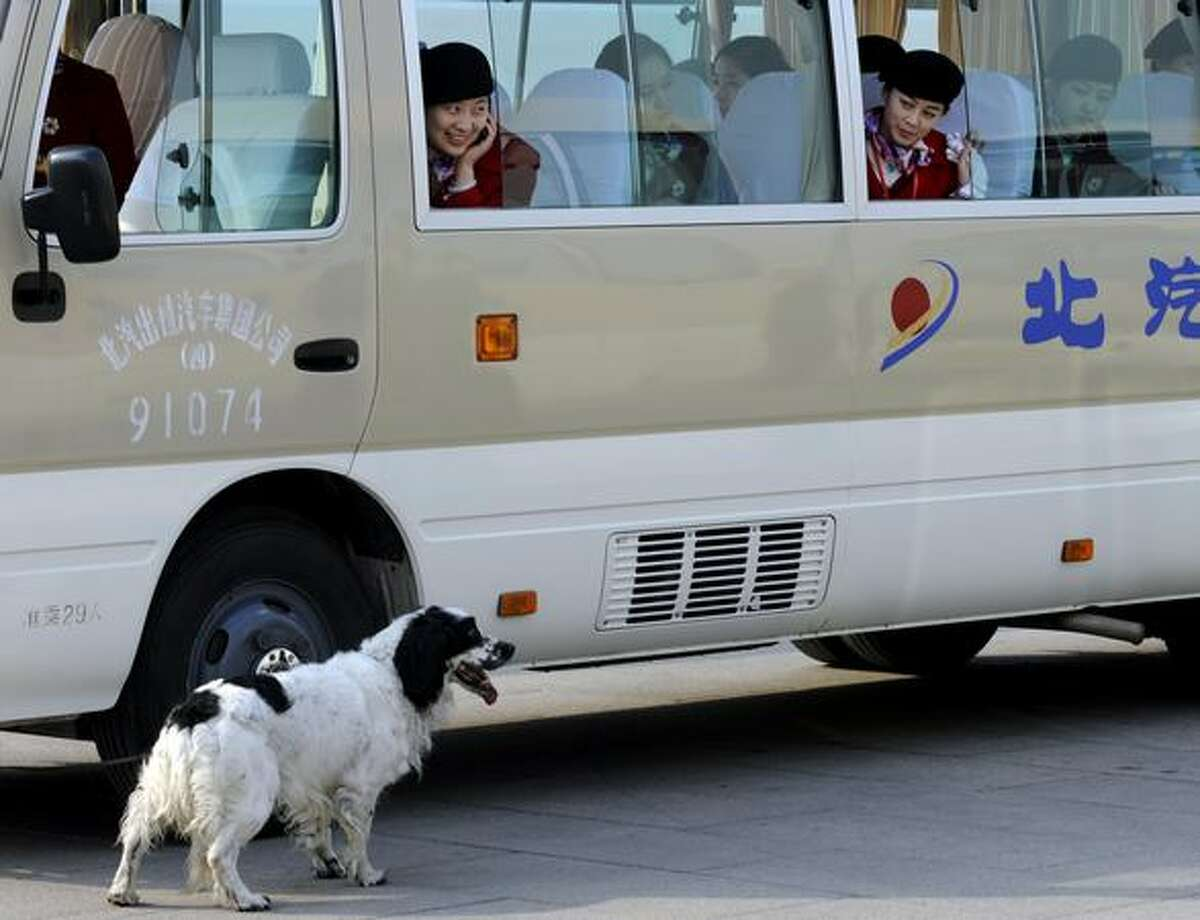 Chinese hostesses watch as a sniffer dog checks out vehicles parked on Tiananmen Square during a session of the National People's Congress at the Great Hall of the People in Beijing on March 11, 2011.