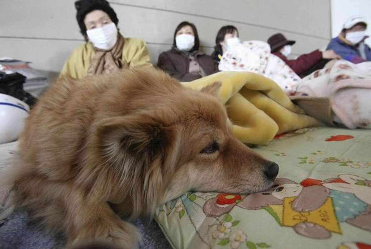 A family rests with their pet dog at a shelter at Minamisanriku town, Miyagi Prefecture, northern Japan, Monday, March 14, 2011, three days after a powerful earthquake-triggered tsunami hit the country's east coast. (AP Photo/The Yomiuri Shimbun, Daisuke Uragami)