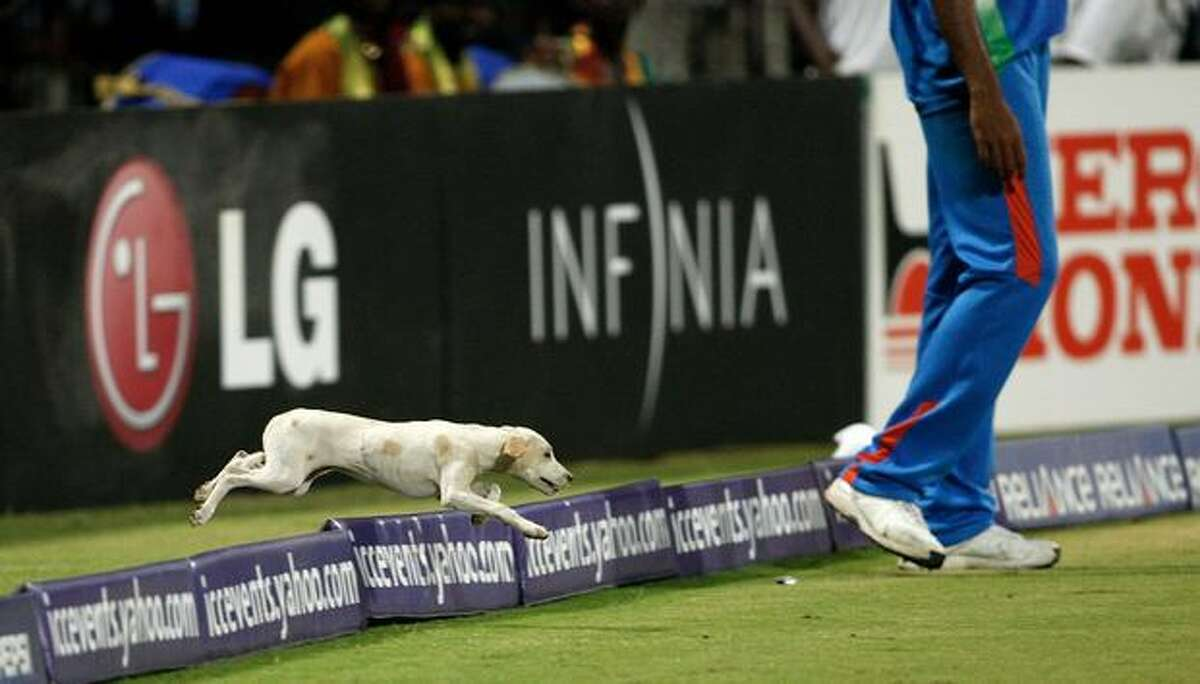 A stray dog invades the pitch during the Group B ICC World Cup cricket match between India and West Indies at M. A. Chidambaram Stadium on March 20, 2011 in Chennai, India.