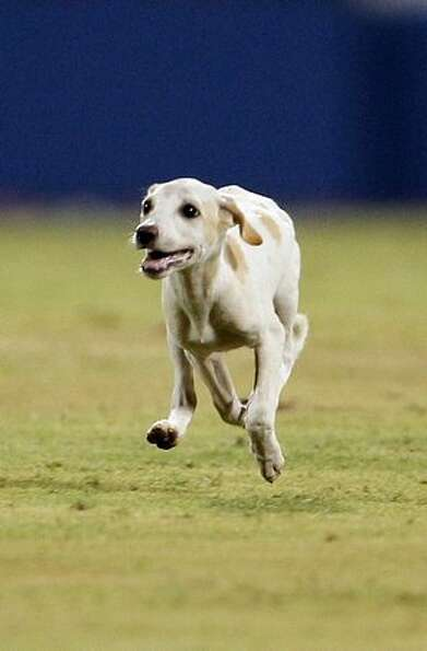 A dog runs on the pitch during the Cricket World Cup match between India and West Indies in Chennai,