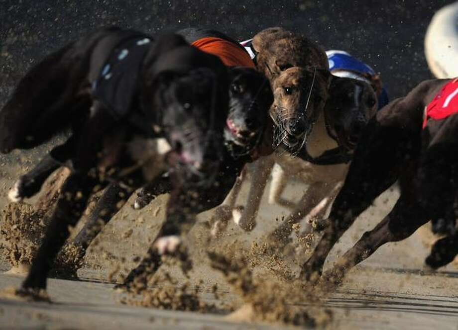 A general view of dogs running at Romford Greyhound Stadium on March 24, 2011 in Romford, England. Photo: Getty Images / Getty Images