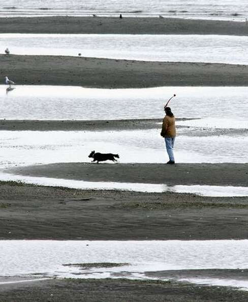 A dog owner plays fetch on the beach during low-tide near the Indianola Dock on March 22, 2011 in In