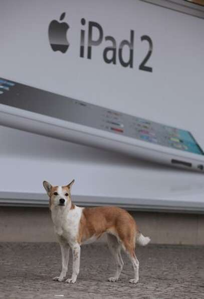 A dog stands in front of an advertisement for the new Apple iPad 2 on the first day the tablet compu