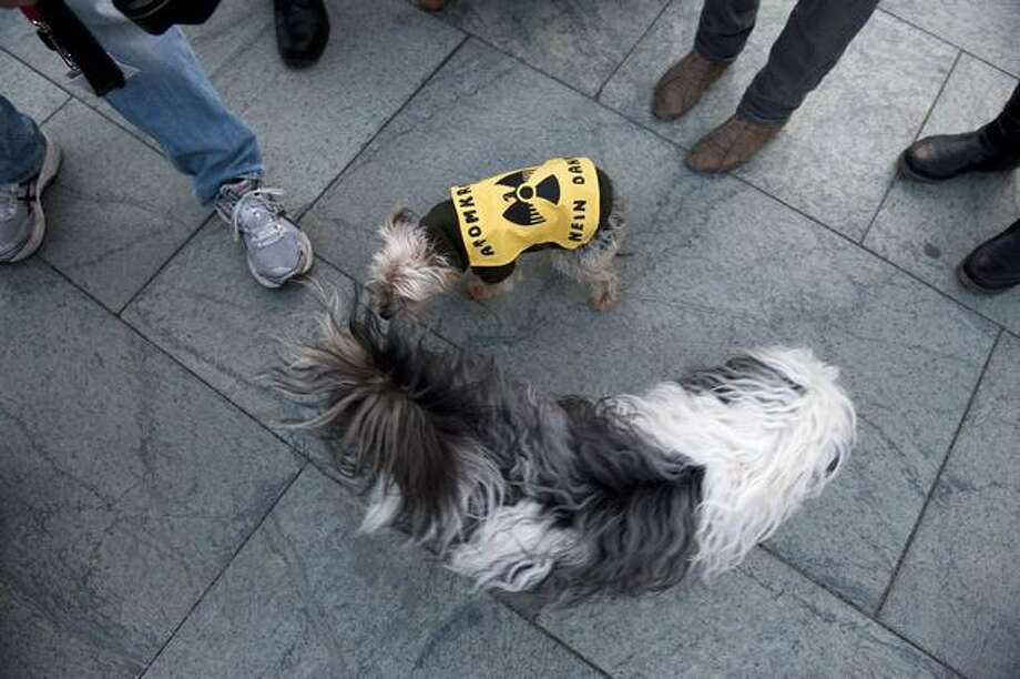 A dog strapped with an anti-nuclear banner plays with another dog during a protest in front of the chancellery in Berlin March 21, 2011. Photo: Getty Images / Getty Images