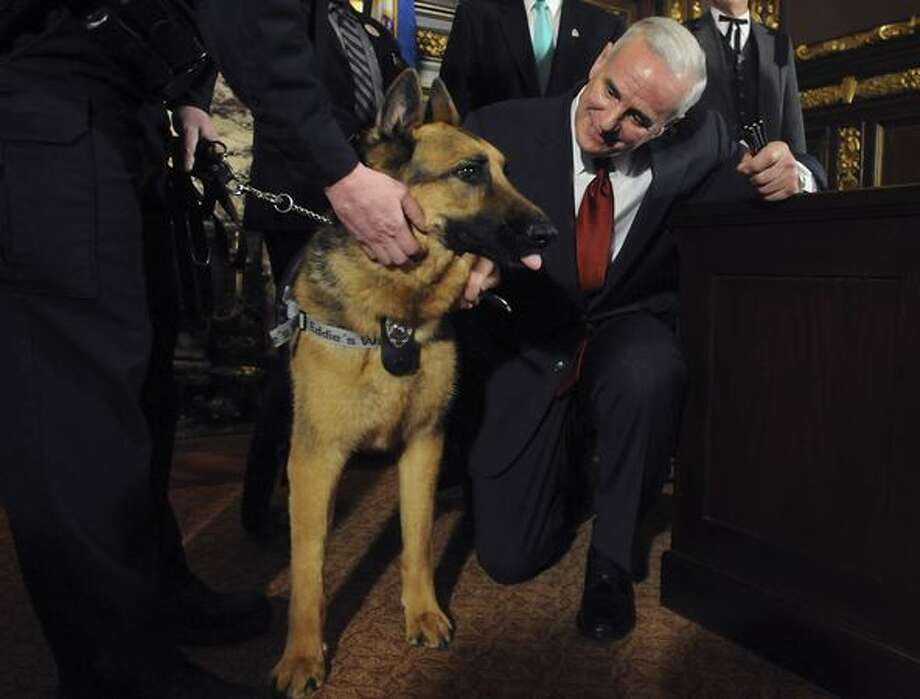 Minnesota Gov. Mark Dayton greets Major, a Roseville, Minn., Police canine, after signing a bill enacting stiffer penalties for people who harm or kill public safety animals on Tuesday, March 22, 2011 at the state capitol in St. Paul, Minn. Major was stabbed four times by a suspect in a November 2010 burglary. (AP Photo/Pioneer Press, Chris Polydoroff) Photo: Associated Press / Associated Press