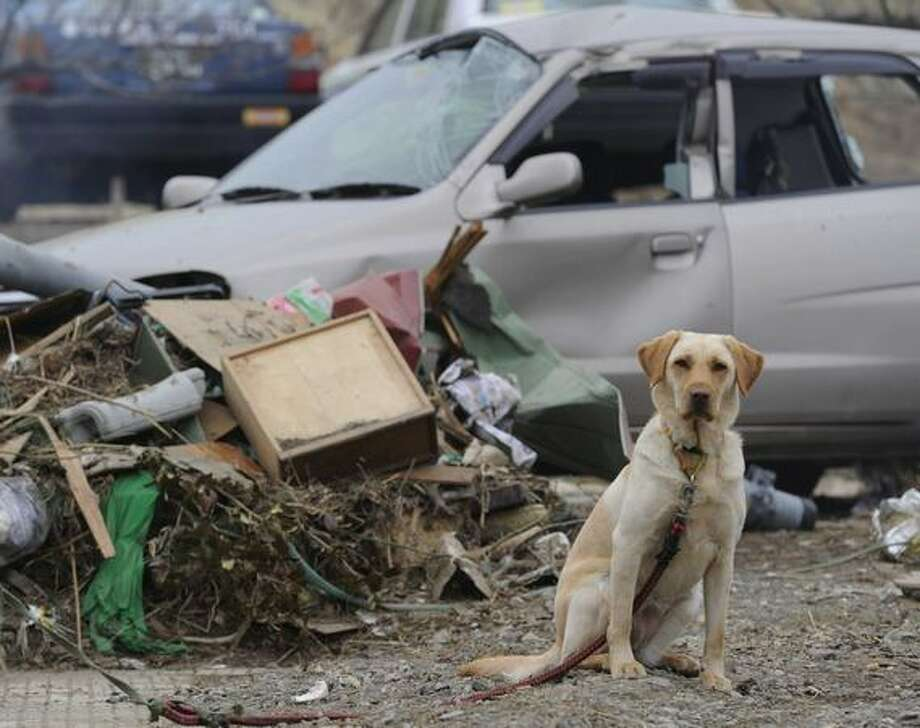 A dog waits for its keeper in front of a devastated house in Higashimatsushima, northern Japan, Monday, March 21, 2011, after the March 11 earthquake and tsunami. (AP Photo/Kyodo News) Photo: Associated Press / Associated Press