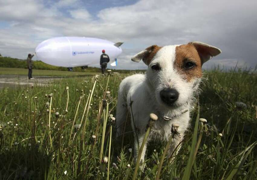 A dog stands in front of an air robot zeppelin of the distance university of Hagen during a trial at the German army base in Hammelburg, Germany. ELROB provides an overview of the current state of affairs in European unmanned system technology and to evaluate commercial off-the-shelf products for military use. It is to show what is feasible in robotics, to support technological developments in Europe, and to find solutions for the current military challenges.
