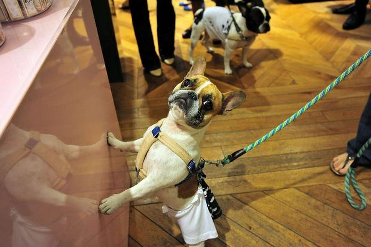 Dogs at the Juicy Couture celebration of Fashion's Night Out at Juicy Couture Flagship on Sept. 10, 2010 in New York City.